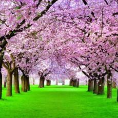 Фотообои на флизелине DECOCODE Японская аллея 31-0429-HH (300*280см)