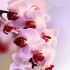 Фотообои Ветка орхидеи DECOCODE 21-0007-FR (200х280см)