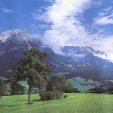 Декоративное панно Альпийский луг 294х201  (9 листов)