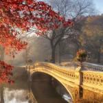 Фотообои Осенний сад DECOCODE 13-0294-PE (130х250см)