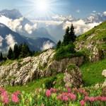Фотообои Альпийский луг DECOCODE 26-0509-PG (260х250см)