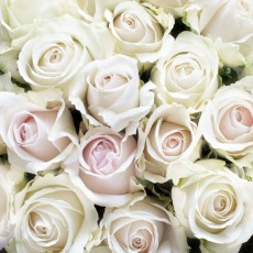 Декоративное панно Белые розы DECOCODE 31-0412-FE (300х280 см)