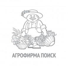 Патиссон НЛО Оранжевый (А) (ЧБ) 12 шт., П/№ 1810